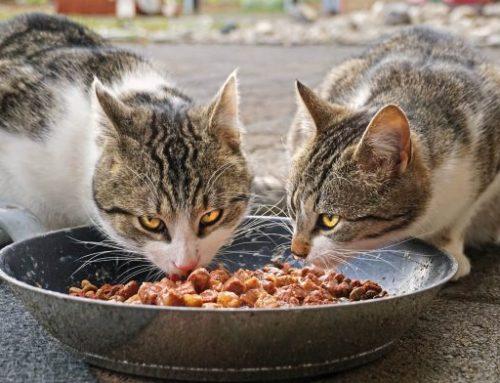 Qu'est-ce que la nourriture humide pour chats ?