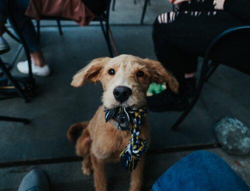 Comment interpréter le langage corporel des chiens?