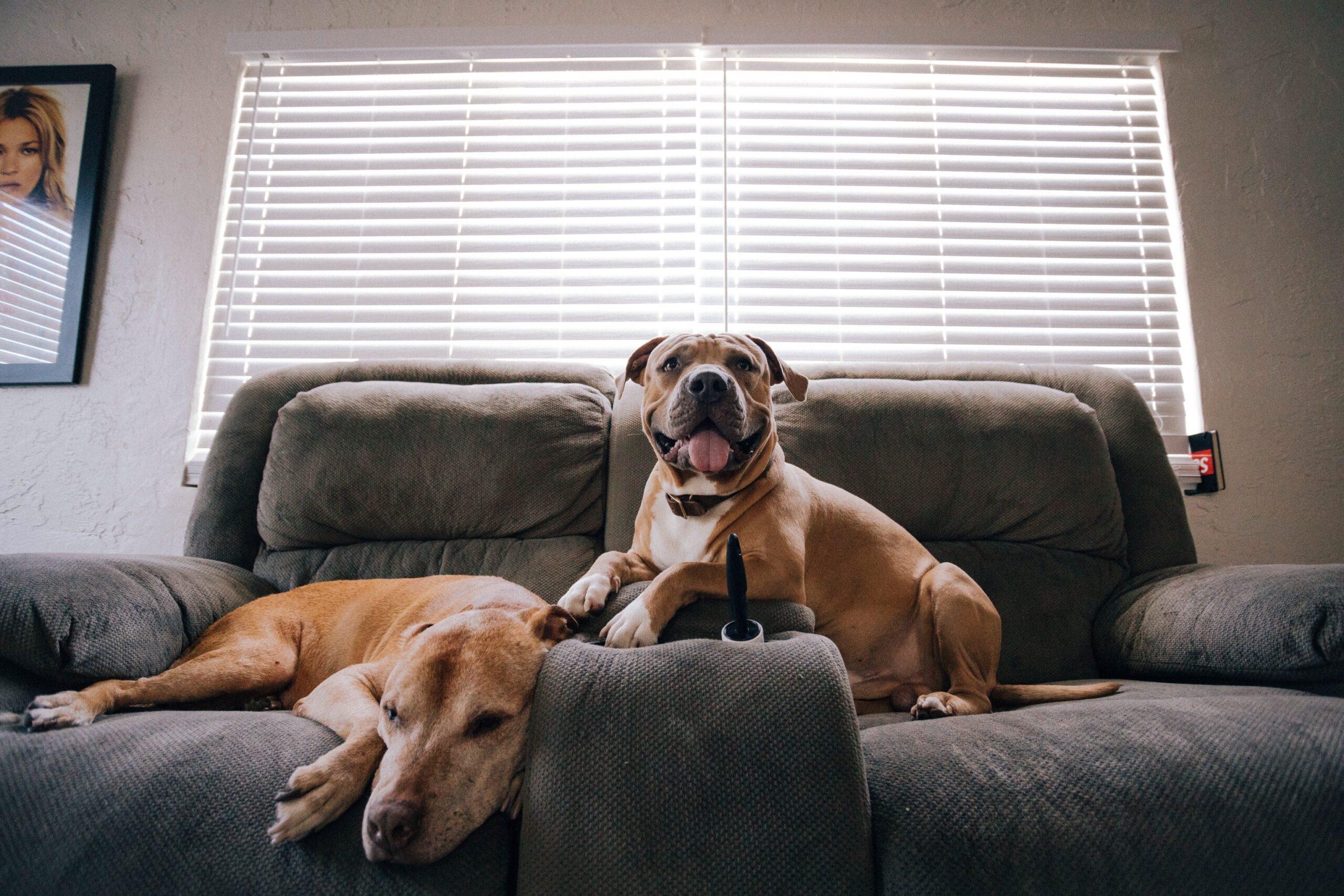 Comment faire pour éviter que votre chien fasse ses besoins dans la maison? - Naku